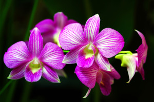 Detailed-Orchids